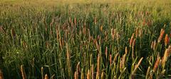 60 Grasslands Collection