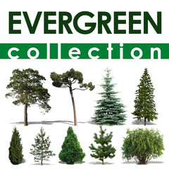 Evergreen Collection 1