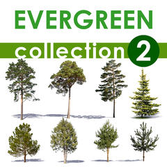 Evergreen Collection 2