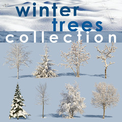 Winter Trees Collection 1