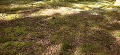 77 Shady Grounds