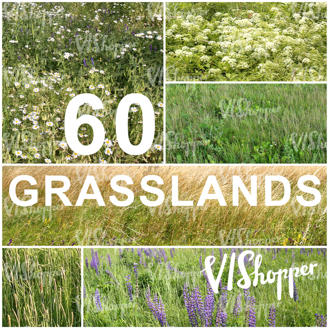 60 Grasslands Collection