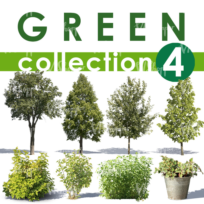 Green Collection 4