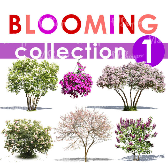Blooming Collection 1