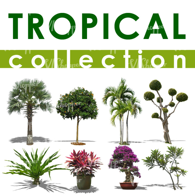 Tropical Collection 1