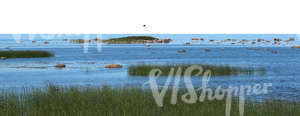 cut out background with a grassy seashore