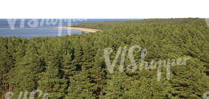 bird-eye background with forest and sea