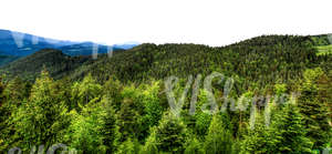 cut out mountainous background with forest
