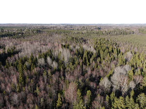 bird-view background with forest