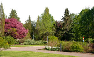 background of a park with trees and bushes
