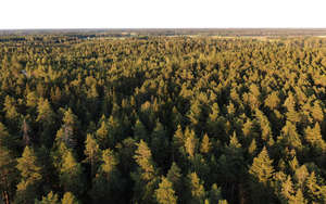 above view of a forest in golden evening light