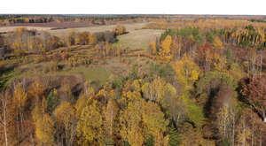 drone view of a forest in autumn colours