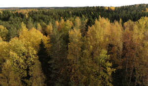 cut out aerial view of a forest in autumn