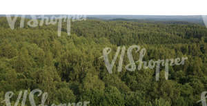 bird-eye view on a cut out background with forests
