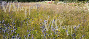 meadow and flowerbeds in full bloom