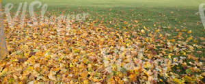 lawn covered with fallen leaves