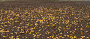 ground with fallen autumn leaves