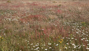 rusty coloured meadow