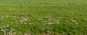ground with small blooming flowers