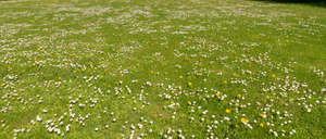 lawn with many blooming flowers