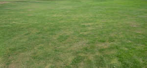 lawn with dry patches