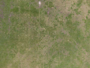 bird-eye of image of low grass