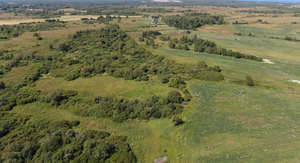 bird eye view of the grassland with trees and bushes