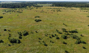 aerial view of a grassland with bushes