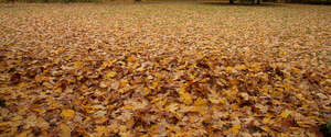 ground thickly covered with fallen leaves
