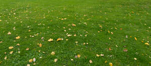 grass field with some fallen leaves