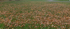 lawn with a lot of fallen leaves