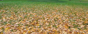 lawn in autumn with fallen leaves