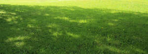 lawn with large tree shadow