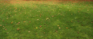 lawn with autumn leaves