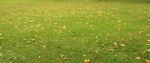lawn with some fallen leaves