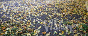asphalt ground covered with leaves