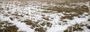 a field partially covered with snow