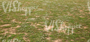 sandy ground partially covered with grass