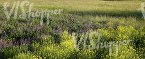 field of tall grass and flowers