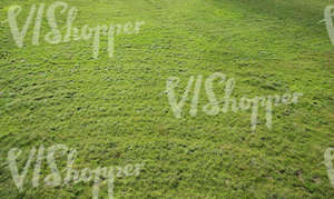 field of grass senn from above