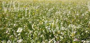 a field of summer flowers