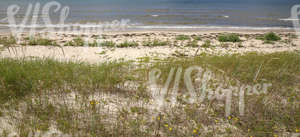 sandy seaside ground with sedges