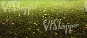grass ground with autumn leaves
