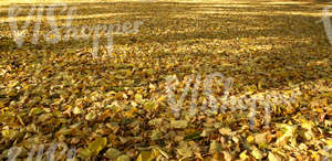 ground fully covered with autumn leaves