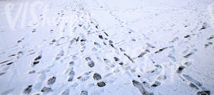 snow covered ground with lots of footprints