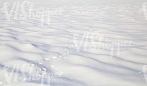 snowy field with animal footprints