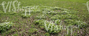 field of grass with spring flowers