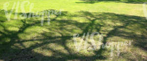 grass ground with tree shadows