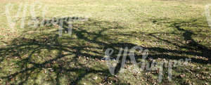 grass ground with dry leaves and tree shadows