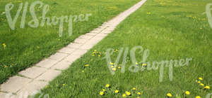grass ground with a walkway and dandelions